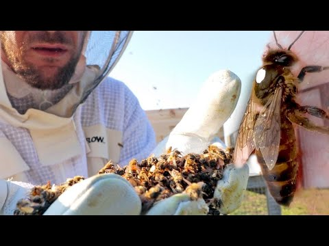 They sent us DEAD bees, but…